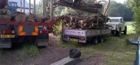 Affordable Log Supplier in Dorset