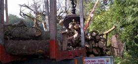 Affordable Logs For Sale in Bournemouth and Poole